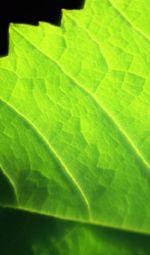 Leafphotobig
