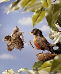 Bird_From_Nest